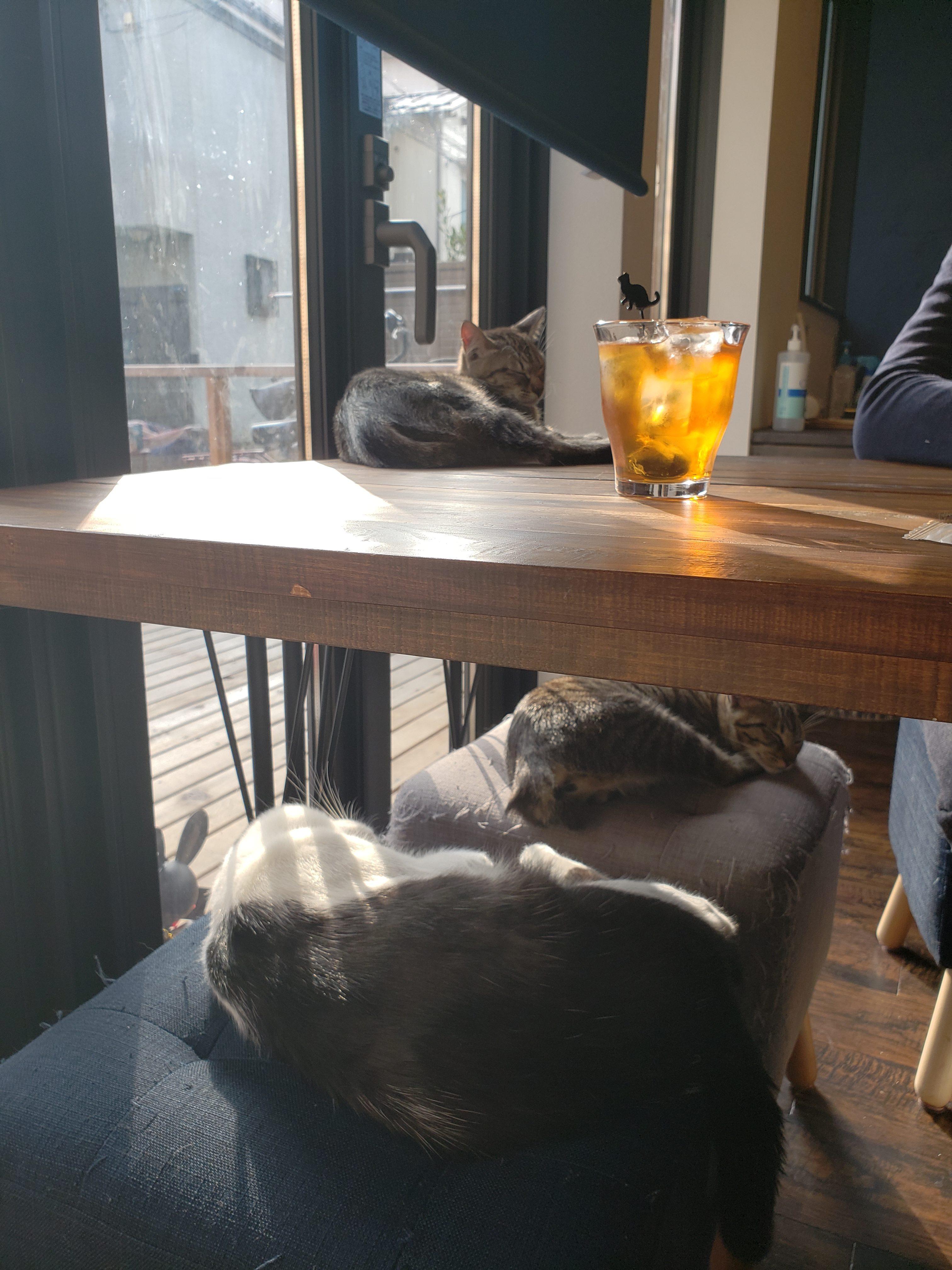 谷中、宿木カフェ